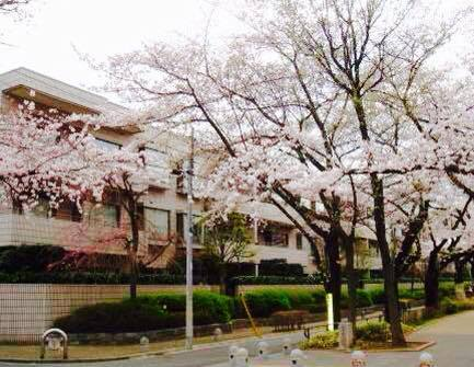 fukazawasakura